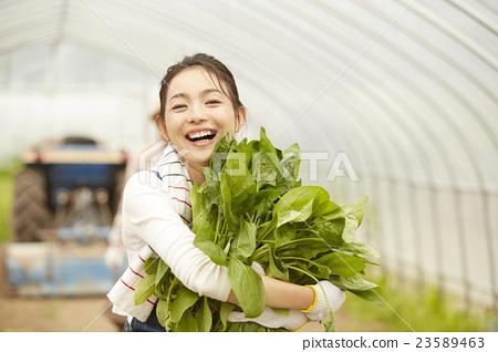 농업 여자 초상화 23589463