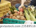 手 蔬菜 莊稼 23589516
