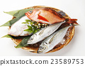 Fish Assortment 23589753
