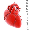 3D illustration Internal Organic - Human Heart. 23589914