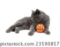 ball animal cat 23590857