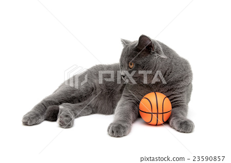 cat with an orange ball on a white background 23590857