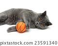 ball animal cat 23591340