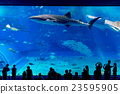 水族館 游泳 沖繩美麗海水族館 23595905