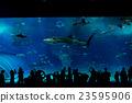 水族館 游泳 沖繩美麗海水族館 23595906