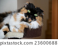 cat, pussy, neko 23600688