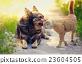 cat dog together 23604505