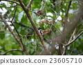小鳥 鳥兒 鳥 23605710