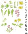 矢量 花朵 花 23607937