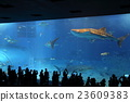 美麗海 水箱 水族館 23609383