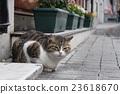 猫咪 猫 波斯猫 23618670