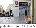 猫咪 猫 波斯猫 23618672