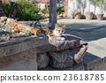 猫咪 猫 波斯猫 23618785