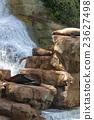 库页冷杉 北海狮 岩石地带 23627498