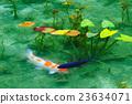 池塘 咸水湖 鲤鱼 23634071