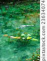 池塘 咸水湖 鲤鱼 23634074