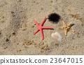 Sea urchin and sea stars 23647015