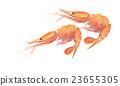 纽扣虾 23655305