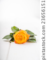 Fragrant flowers on wooden background 23656151