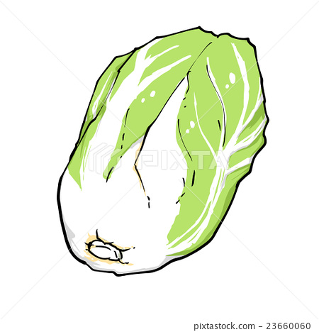 Vegetable cabbage 23660060