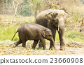 Asian mother elephant staying with her baby  23660908
