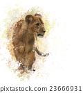Lion Cub watercolor 23666931