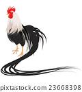 닭, 새, 꼬리 23668398