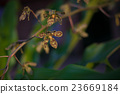 Photo Green Tropycal Orchid on the Blurred 23669184