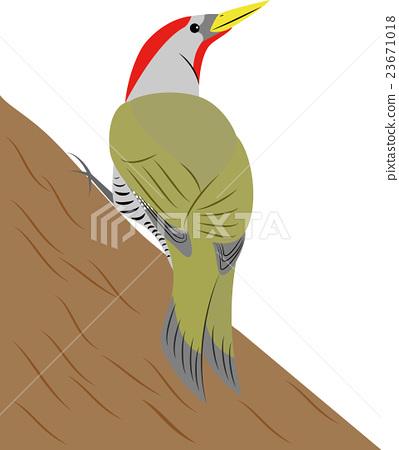 Igora (male) Illustration 23671018