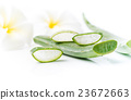 Aloe Vera sliced isolated 23672663