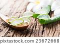 Aloe Vera leaf sliced 23672668