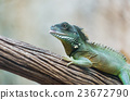 Iguana on branch 23672790