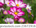 Beautiful colorful winter Flowers 23672916