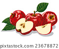 red ripe apples 23678872