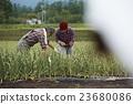 农场家庭父母工作风景 23680086