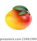 Mango fruit isolated on white background 23681990