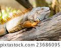 鬣蜥蜴 蜥蜴 绿色 23686095
