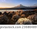 Mt.Fuji sunrise from Oishi park,Japan 23686489