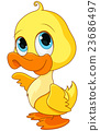 Baby Duck 23686497