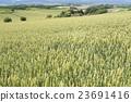 언덕의 밭 23691416