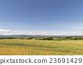 언덕의 밭 23691429