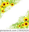向日葵 翠綠 鮮綠 23692626