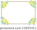 玫瑰 玫瑰花 花朵 23693451