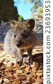 動物 哺乳動物 小貓 23693953