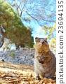 動物 哺乳動物 小貓 23694135