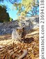 動物 哺乳動物 小貓 23694138