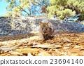 動物 哺乳動物 小貓 23694140