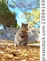 動物 哺乳動物 小貓 23694149