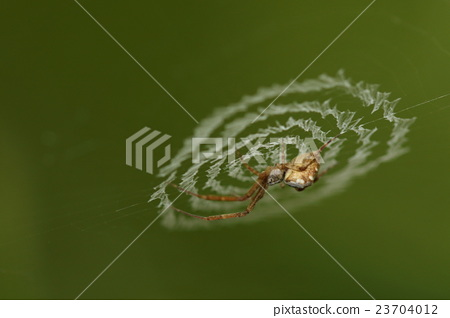Creatures Insects Catacial hoes spiders, nests all have a spiral of about two centimeters 23704012