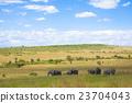 elephant, masai, mara 23704043